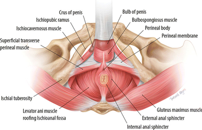 Read more about the article Floored by the pelvis