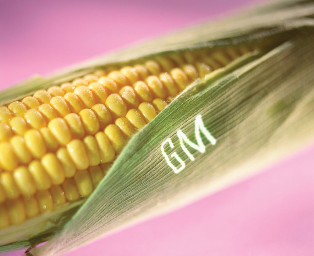 Read more about the article Are GMO foods good or bad for you? Here are some myths and facts